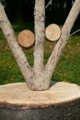 Double embending, 2003, wood, 40 x 35 x 7 cm
