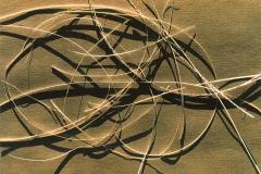 Cutting, photo-carton, 65x85, 1991
